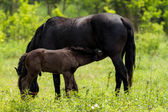 Horse family — Stock Photo