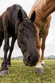 Pferde auf der weide — Stockfoto