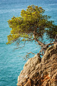 Tree on the rock — Stock Photo