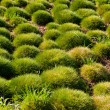 Stock Photo: Grass spherical
