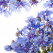 Blue cornflower — Stock Photo #24614199