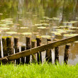 Rotten fence and water — Stock Photo