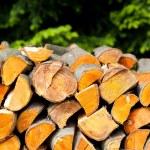Alder trunk wood — Stock Photo