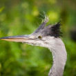 Grey heron — Foto de Stock