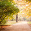 Autumn in park — Stockfoto