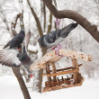 Hungry birds in winter — Foto Stock