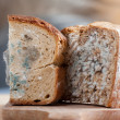Mould on bread — Stock Photo
