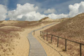 Visitors' path in Grey Dunes nature reserve — Stock Photo