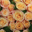 Yellow pink roses in sunlight — Stock Photo #12009112