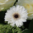 White gerbera and roses - Foto Stock