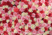 配置で白とピンクのバラ — ストック写真