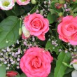 Stock Photo: Shocking pink roses