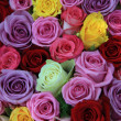 Mixed roses — Stock Photo #12010721
