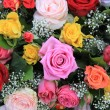 Multicolor rose arrangement — Stock Photo