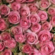 Pink roses in a group — Photo