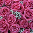 Stock Photo: Pink roses and white gypsophila