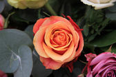 Solitaire orange rose — Stock Photo