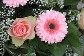粉红玫瑰、 扶郎 — 图库照片