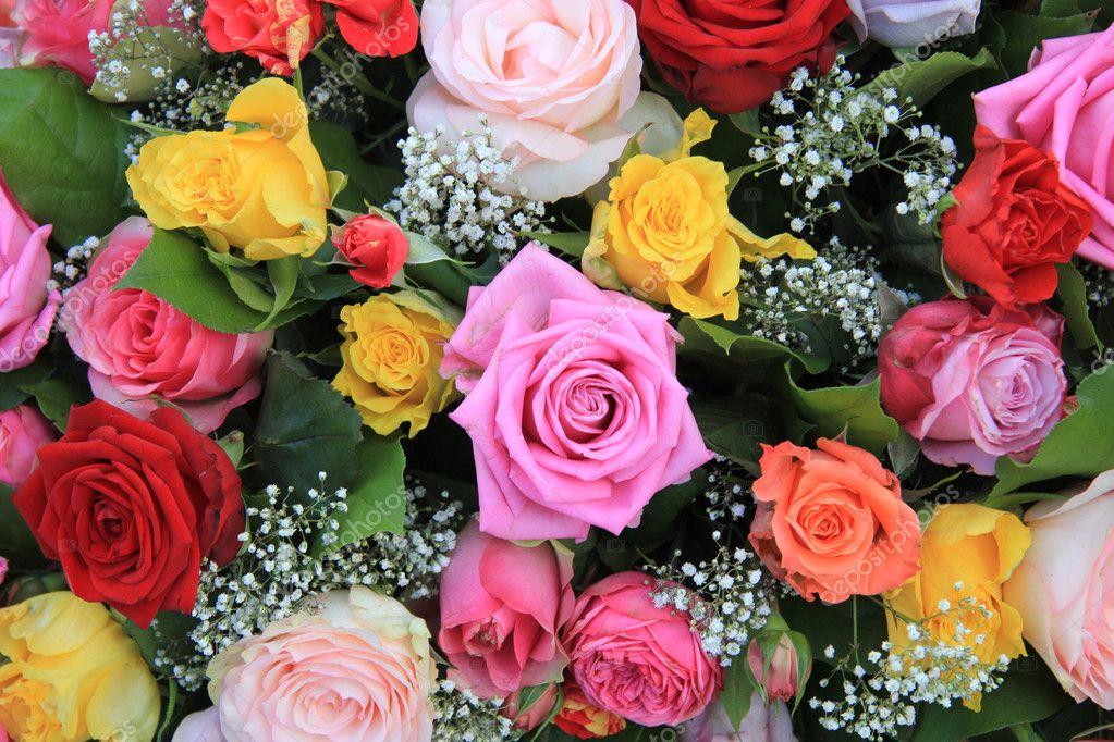 rosas no jardim poema:no jardim da poesia rosas natural que as rosas sorriam em várias