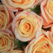 Stock Photo: Yellow pink roses in sunlight