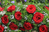 Red roses and gypsophila — Stock Photo
