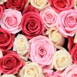 Stock Photo: White and pink roses in arrangement