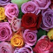 Mixed roses — Stock Photo
