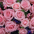 Pink roses in a group — Stok fotoğraf