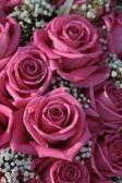 Pink roses and white gypsophila — Stock Photo