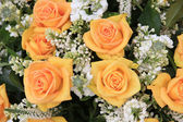 Yellow rose and white common lilac wedding flowers — Stock Photo