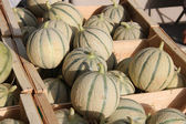Melons at a market — Foto Stock