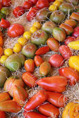 Tomatoes in various colors and shapes — Stock Photo