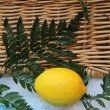 Stock Photo: Lemon and wicket basket