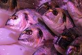 Fresh fish at a fish market — Stock Photo