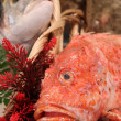 Tub gurnard at a market — Stock Photo