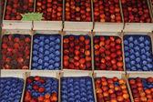 Peaches and Nectarines — Stock Photo