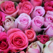 Stock Photo: Pink wedding roses