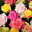 Multicolored rose bouquet — Stock Photo