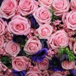 Pink roses in a group — Stock Photo #14019730