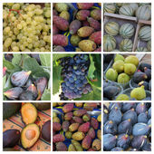 Purple and green fruits collage — Stock Photo