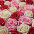 White and pink roses in arrangement — Stock Photo
