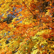 Fall foliage — Stock Photo #14728391