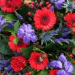 Flower arrangement in red and blue — Stock Photo
