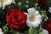 Bílý gerber a červené růže — Stock fotografie