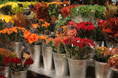 Various flowers in a flower shop — Stock Photo