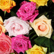 Multicolored rose bouquet — Stock Photo #14730319