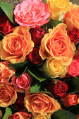 Mixed roses in yellow, red and orange — Stock Photo