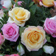 Yellow and pink roses — Stock Photo #16311473
