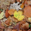 fall foliage — Stock Photo