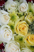 Yellow and white roses — Stock Photo